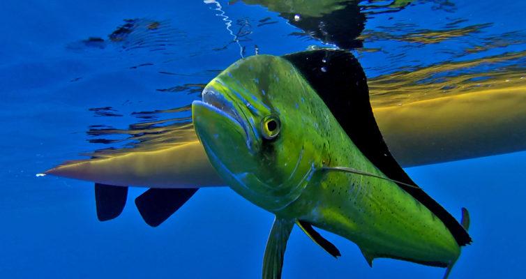 Inland yaker for Fishing kayak under 300